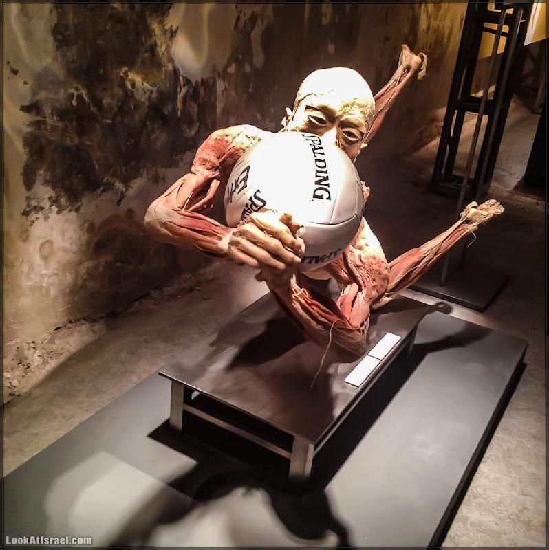 Выставка «Bodies» (foto il  фото тель авив интересно выставки музеи фестивали ha тахана  20120720 ta bodies 002 0525)