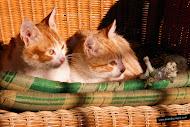 El gnomo Rascaño descansando al sol con los gatitos que lo miran asombrados