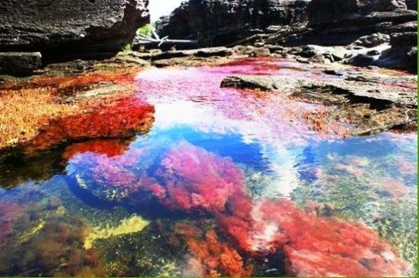 Река пяти цветов Каньо-Кристалес