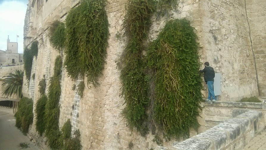 Jardín vertical Mallorca