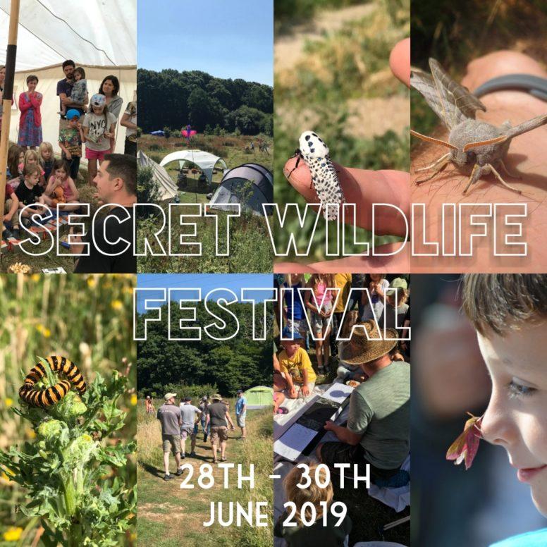 Wildlife festival at Sussex campsite