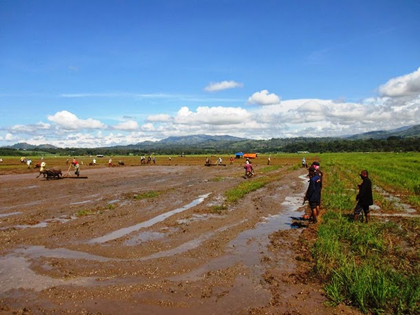 Farmers claim lands from Central Mindanao University