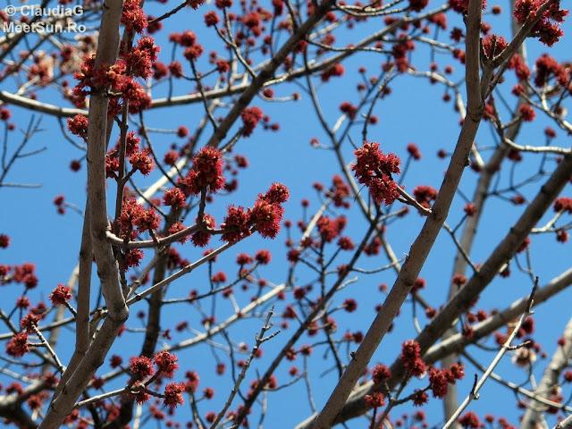 primavara, copac inmugurit