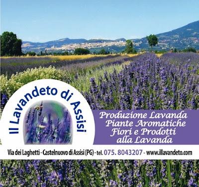 Dormire ad Assisi, alberghi, b&b, agriturismi. Assisi dove ...
