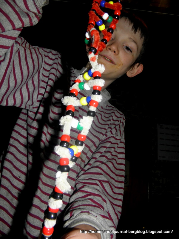 how to make dna model with pipe cleaners