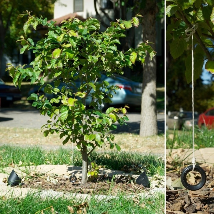 Miniature Tire Swing