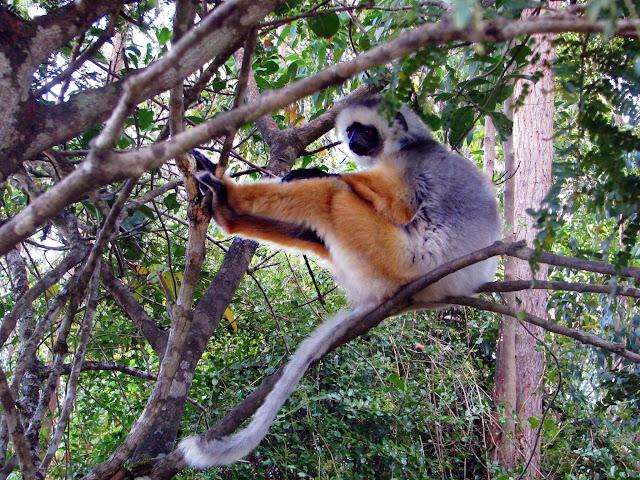 صور من مدغشقر Madagascar 14704067514