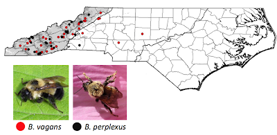 bumble bee distributions in North Carolina