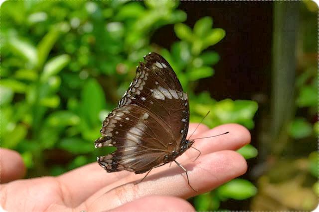 Taman-Rama-Rama-dan-reptilia-Melaka-Butterfly-and-Reptile-Sanctuary