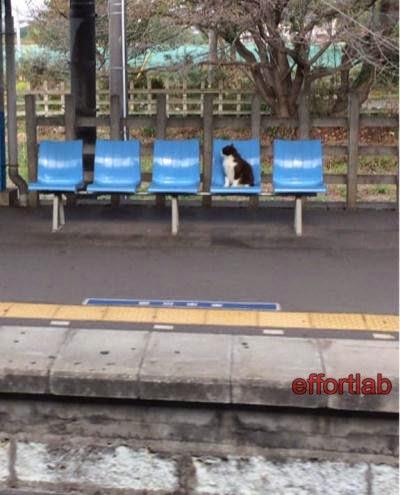 kucing-dalam-keretapi