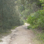 The servicetrail north of Davidson Reserve (24114)