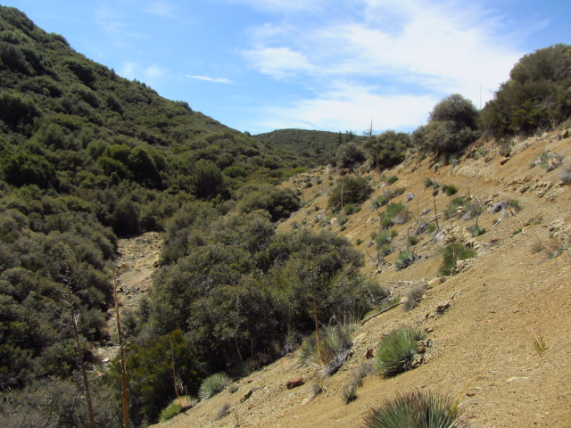 trail making its way above the dry stream bed