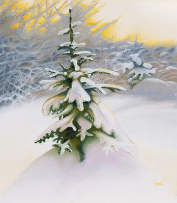 Heavy Snow on Spruce