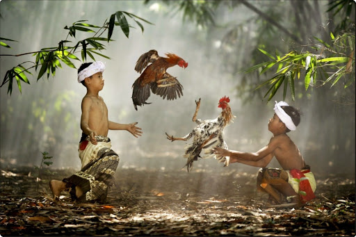 Suradita Village, West Java, Indonesia - children playing with their roosters.jpg