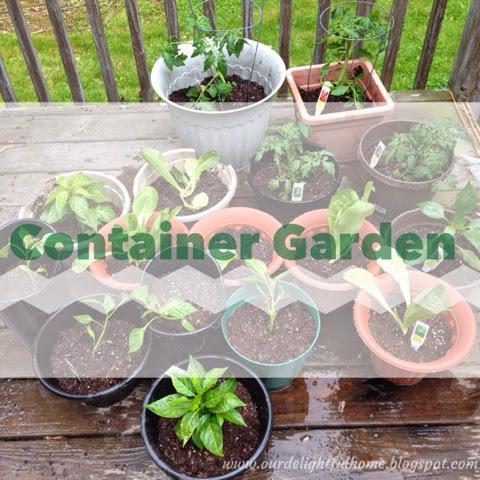 finally- container vegetable #garden