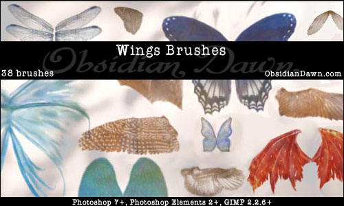 insect wings photoshop brushes