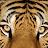 Jonathon Grossman avatar image
