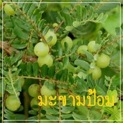 ผลิตภัณฑ์จากมะขามป้อม วิตามินซี จากธรรมชาติ ช่วยต้านอนุมูลอิสระ บำรุงสุขภาพ และ ผิวพรรณ