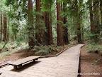 Main Trail in Muir Woods