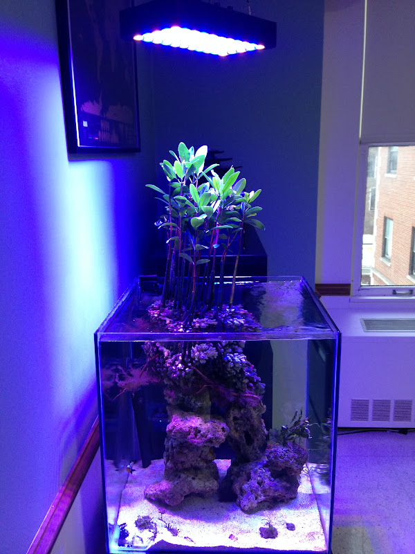 Show Your Mangrove Systems Page 15 Reef Central Online
