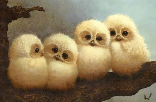 owls_gif.jpg