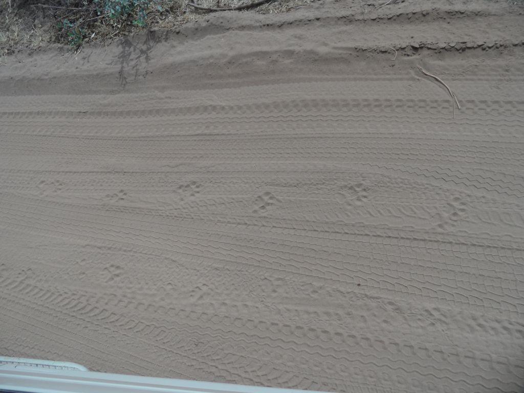 Manyara'da Aslan'ın Ayak İzleri