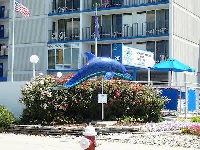 Neales on Wheels: Virginia Beach Boardwalk