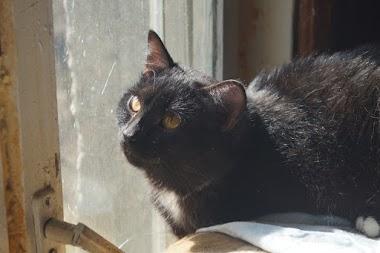 Знакомьтесь! Кот по имени Сосиска