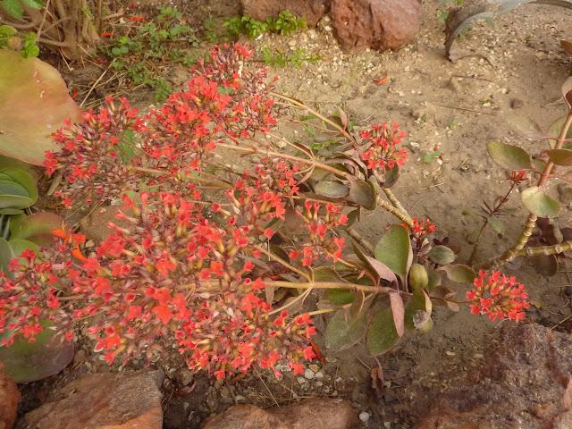 floraisons de fevrier  P1030825