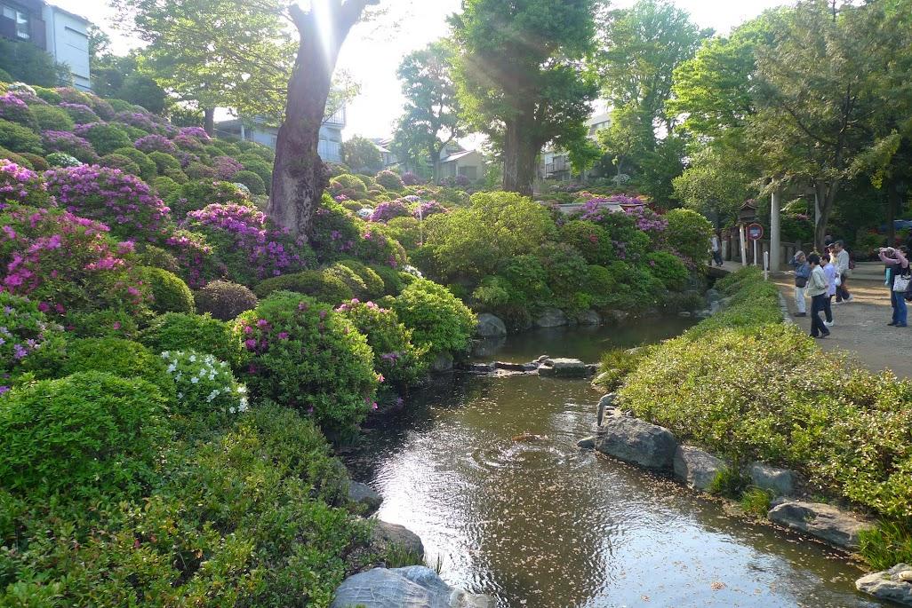 tokyo sanctuaire nezu azalées