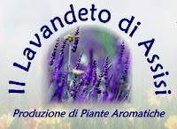 Vendita piante aromatiche ed erbe aromatiche e officinali for Vendita piante ornamentali