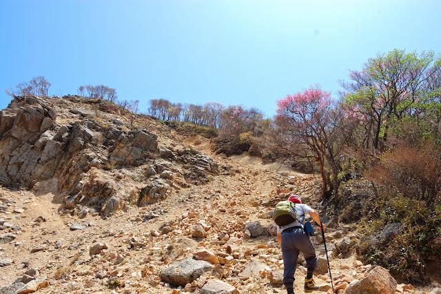 鎌ヶ岳頂上から武平峠への直行の下り道