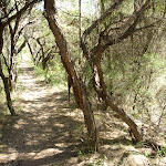 Dense forest north of Somersby Reservoir (371935)