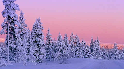 Snow-Covered Forest at Sunset, Lapland, Finland.jpg