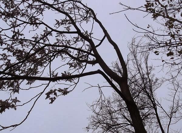 дерево-порыв