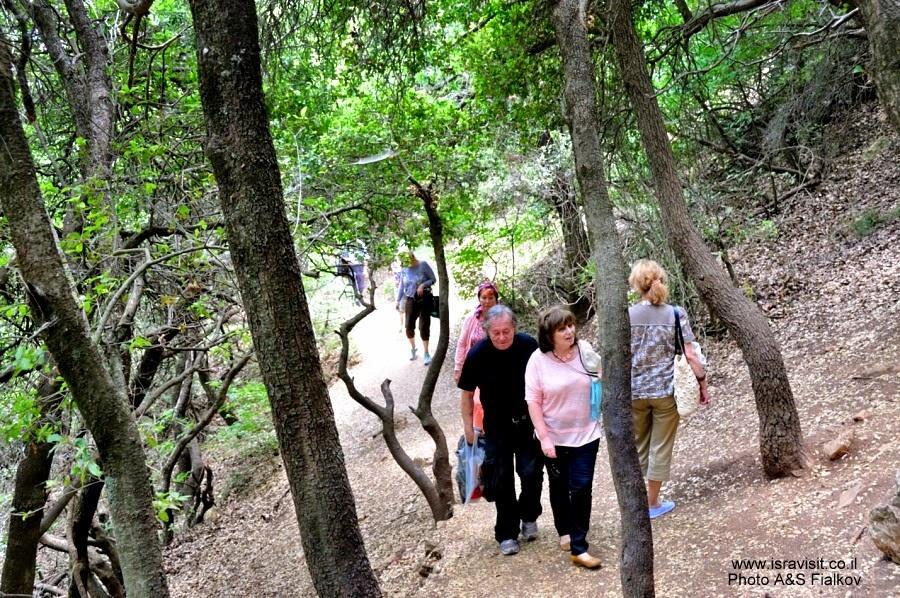 Лес на горе Мирон. Пешеходный маршрут по горе Мирон. Швиль писга Мирон. Экскурсия по Верхней Галилее. Гид в Галилее Светлана Фиалкова.