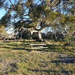 Picnic table and Rennix Walk track head (265196)