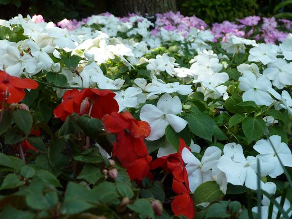 Cuidados del jardin cuidar de tus plantas es - Cuidado de jardines ...