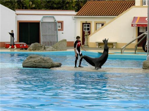 Лиссабон Дельфинарий морской лев фото