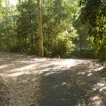 A minor intersection in Blackbutt Reserve (399646)