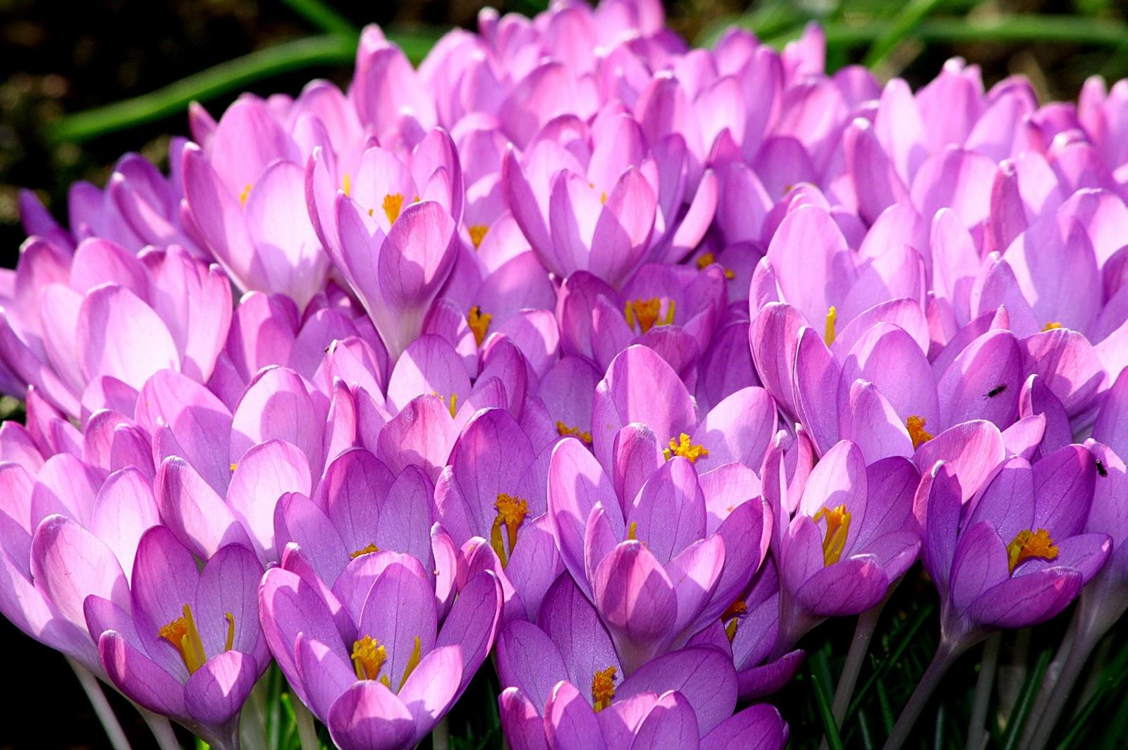 Blumen im märz  Blumen Im März | saigonford.info