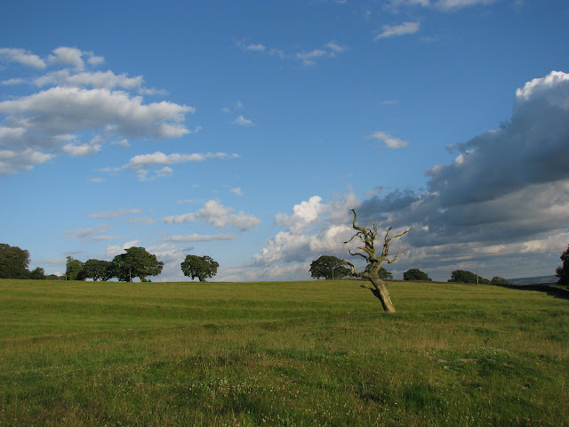 Stromek na obci Wall