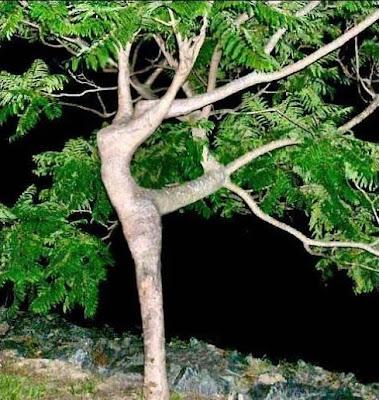 Разговор с деревом