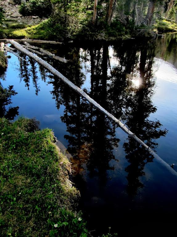 Petit Lake reflection