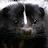 Zexom Ad avatar image