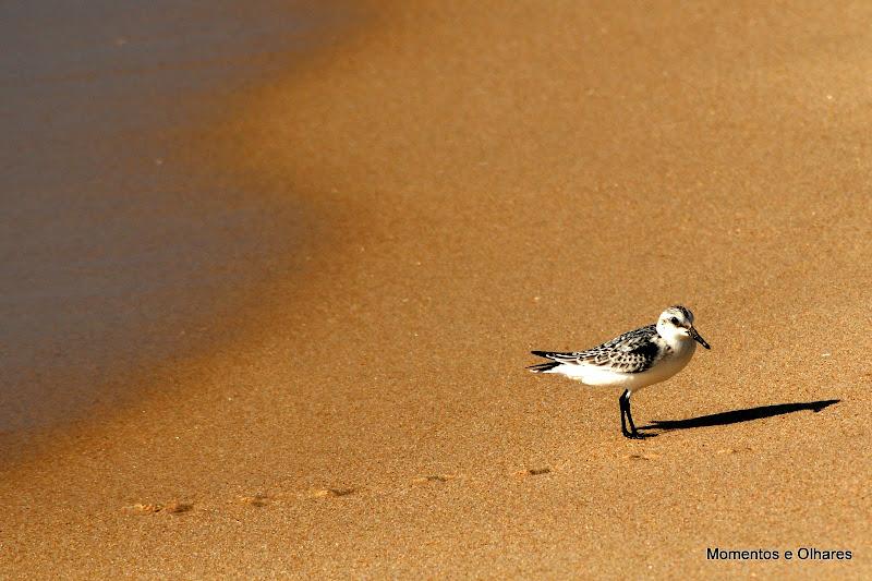 ave na praia do Carvalhal