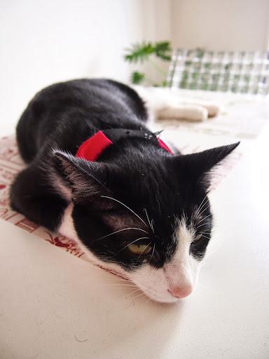 おもしろ猫ブログ