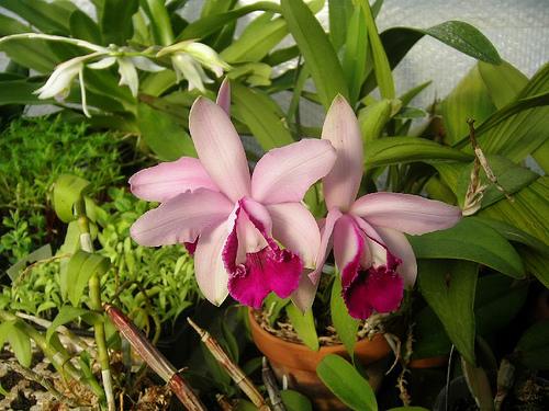 Растения из Тюмени. Краткий обзор - Страница 2 3380488394_b941d97b16