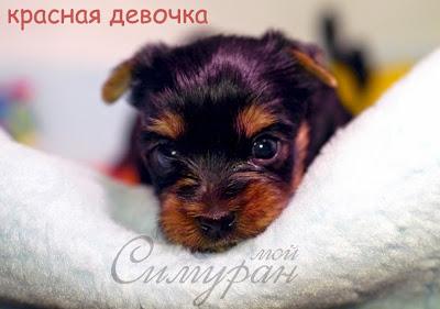 Мой Симуран Ворлд Премьере (Капа) 21