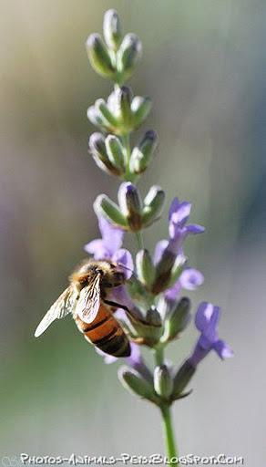 https://lh6.googleusercontent.com/-re3KphgyodE/TttAHleIpNI/AAAAAAAACag/yCIUtZmwVfw/s512/honeybee.jpg
